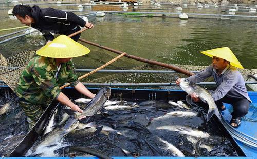 渔民涌入保护区