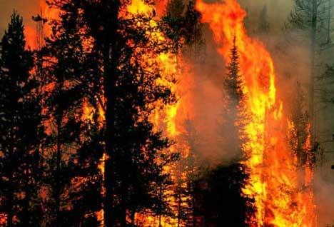 国民银行宣布卢辛代尔森林大火救灾计划