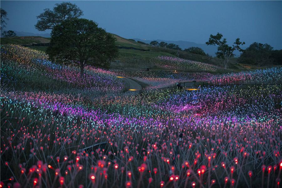 美国西雅图举办沉浸式体验灯展
